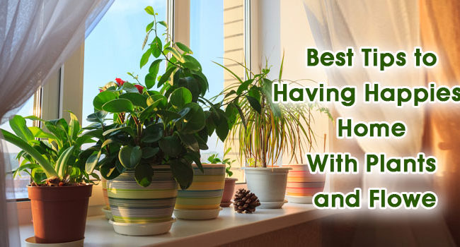 5 Tips to Having Happiest Home With Plants and Flow
